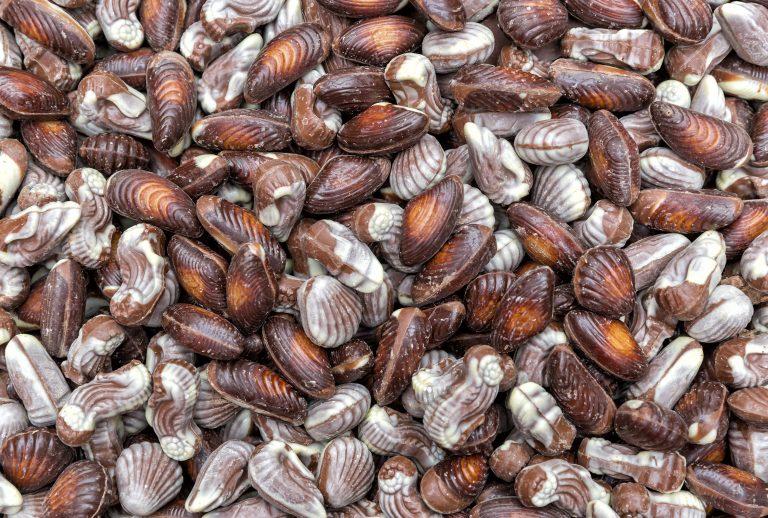 nevenproducten chocola en bonbons voor Food For Feed grondstof