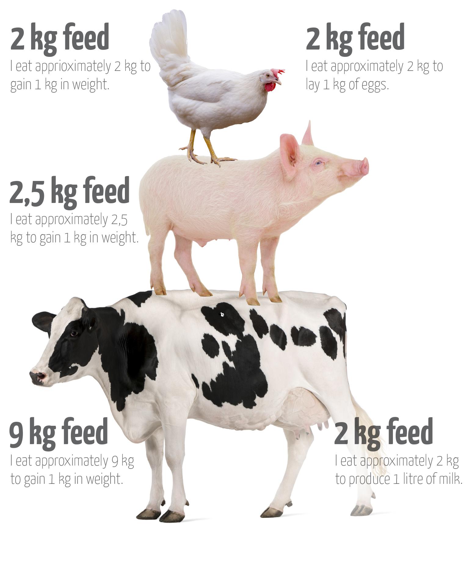 wat eten dieren engels