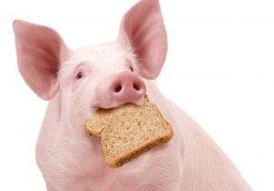 varkens tegen verspilling